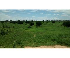 Linda Fazenda MG 775 hectares Pecuária, Floresta e Lavoura