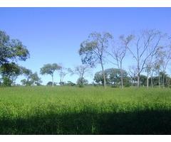 Bela Fazenda MG 407 hectares Pecuária