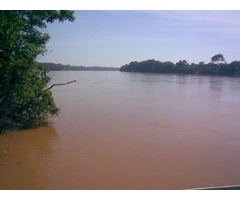 Excelente área de 1000 hectares MG boa para Pecuária e Eucalipto