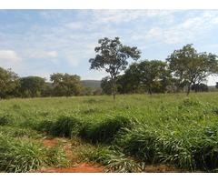 Excelente Fazenda MG 1500 hectares toda Formada de Pasto